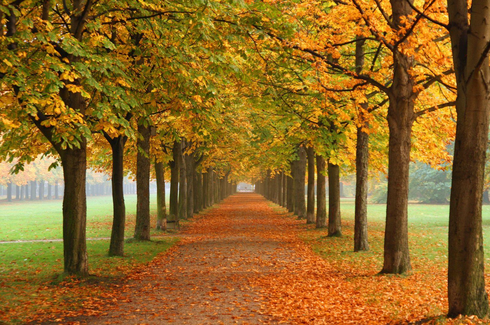 Season's Greetings: The Effect Of Seasonality On Consumer Attitudes