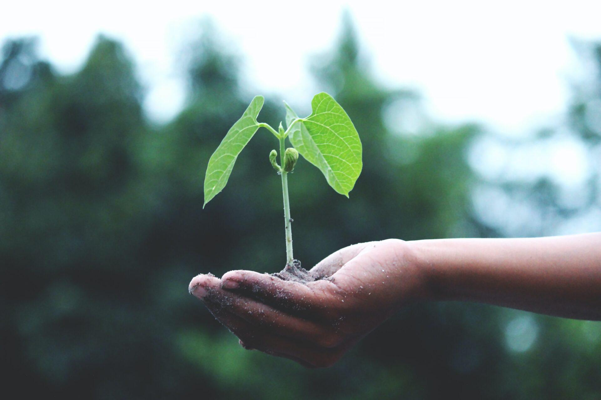 Preparing For A Greener Future