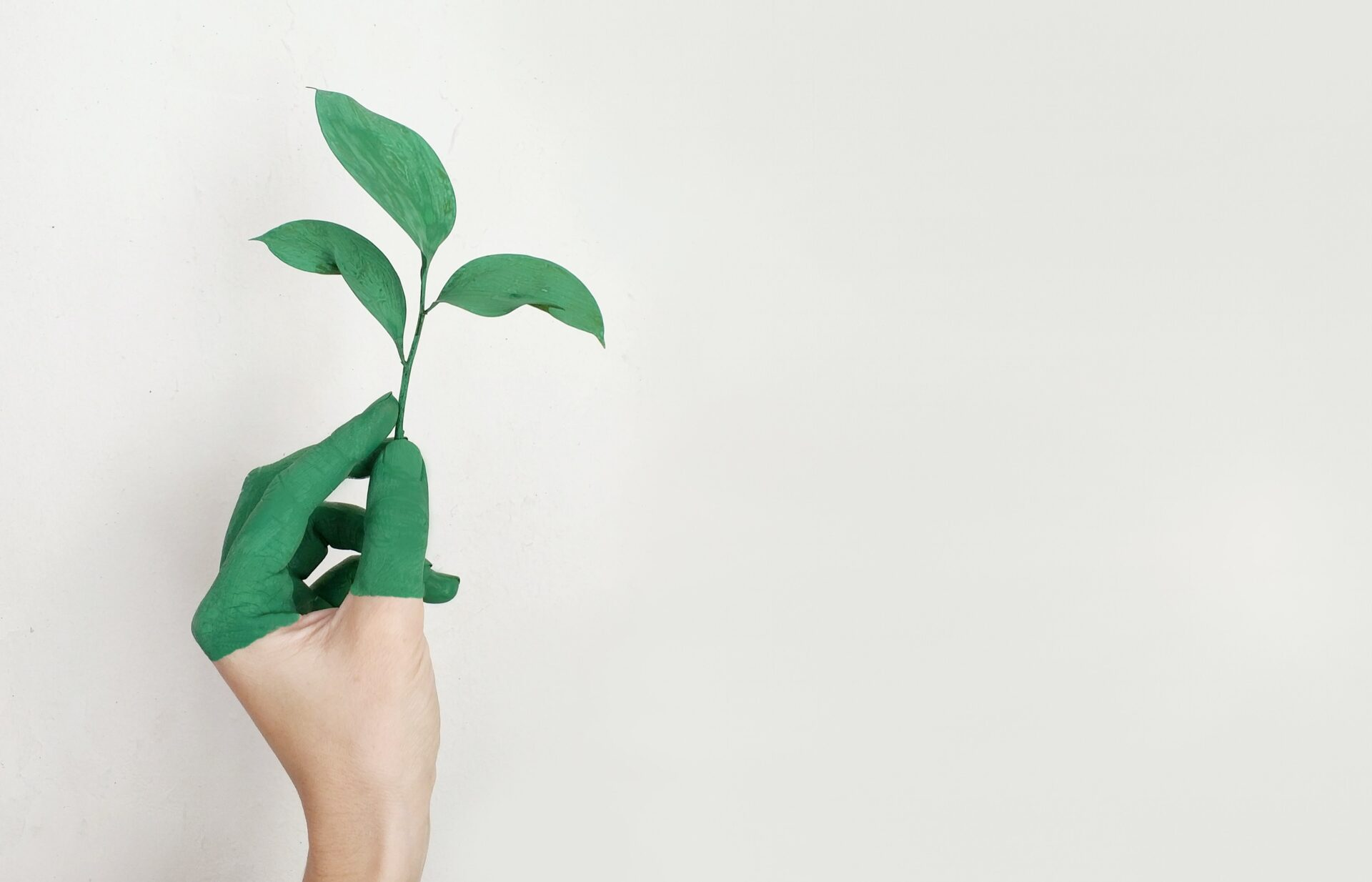 Why Brand Authenticity Matters In Sustainability